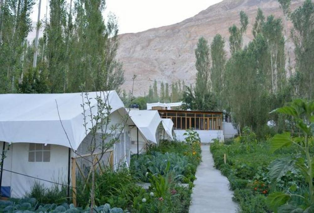 Mystique Meadows Swiss Cottage Camp In Nubra