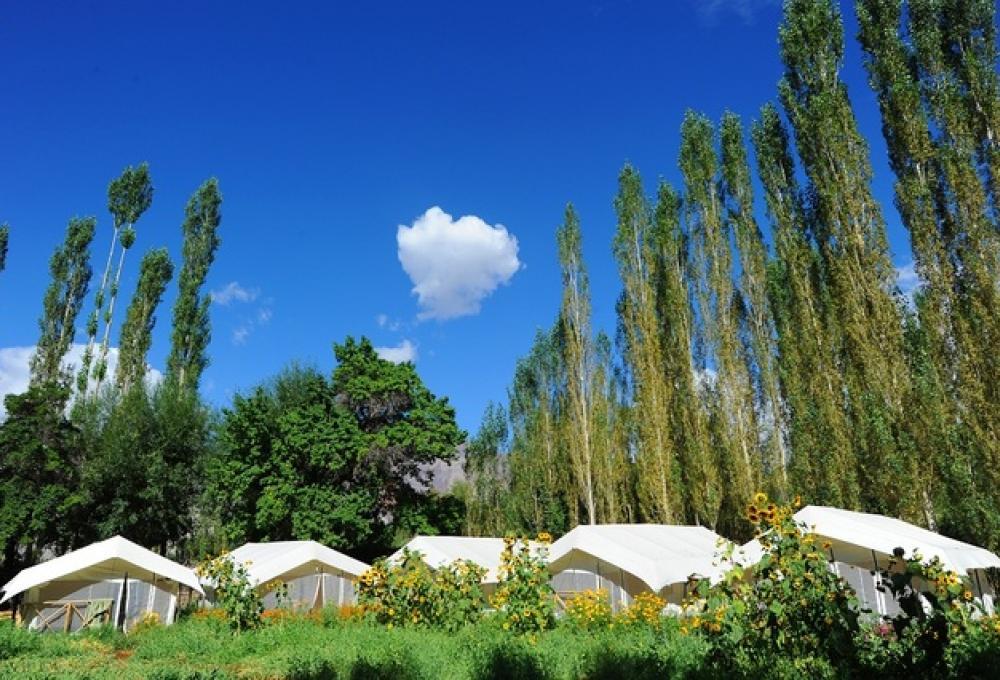 Mystique Meadows Swiss Cottage Camp In Nubra