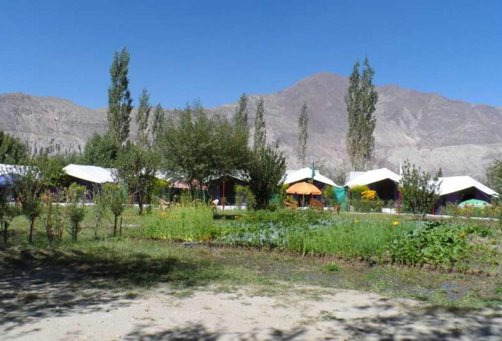 Tiger Camp In Nubra