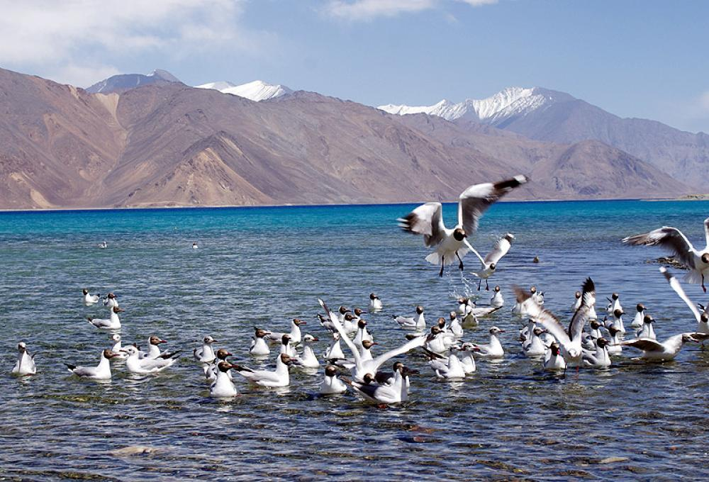 Regal Camp In Pangong